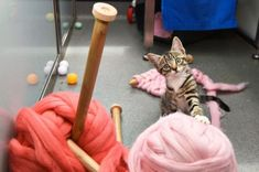 At Battersea Dogs & Cats Home you can knit with (adoptable) kittens!