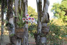 Aula 01 - Plantas / Flores - #UPIS102014