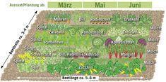 Anbauplan für eine Mischkultur