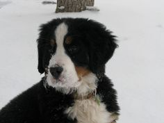 Winnee loves the snow