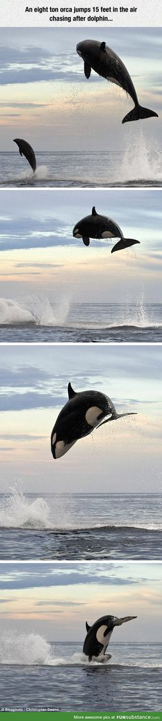 dear me 2nd orca related post in a week