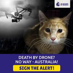 Stop Australias Sick Plans To Massacre Cats With Poison Dropping Drones Christmas Island Animal