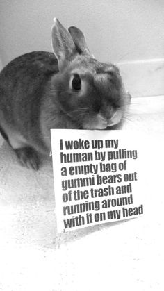 Although they tend to not have any shame, bunnies still need to be reminded of their michievious deeds. Feel free to submit bunny shaming photos of your own! Submit and ask box will always be open. Cute Baby Bunnies, Funny Bunnies, Cute Funny Animals, Funny Animal Pictures, Cute Pictures, Funny Rabbit, Rabbit Jokes, Pet Rabbit, Bunny Care