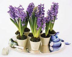Potted Plants as Wedding Centerpieces : Brides.com