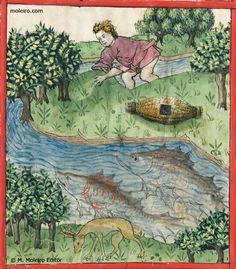 Ambar, f.82v. Ambergris, f.82v. Ambre, f.82v. Tacuinum Sanitatis (Rhineland, Germany. Mid-15th century. )