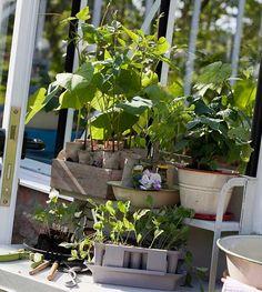 – Hver vår kribler jeg etter å sette i gang, sier Torill Nilsen fra Fredrikstad. Hun har ti års erfaring med drivhus i hagen - her får du hennes beste tips.