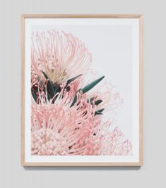 Artwork Framed Protea Blossom-Botanical Art For The Home-Sydney Gifts and Homewares Shop-Lifestyle Gifts Sydney-Shop for Botanical Art For The Home-Online Art Framed Artwork, Framed Prints, Art Prints, Wall Art, Botanical Art, Online Art, Home Art, Tapestry, Drawings