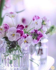 Little Flowers, My Flower, Pretty Flowers, Flower Vases, Flower Arrangements, Flores Para Algernon, Fleur Pansy, Free Watercolor Flowers, Flowers For Algernon