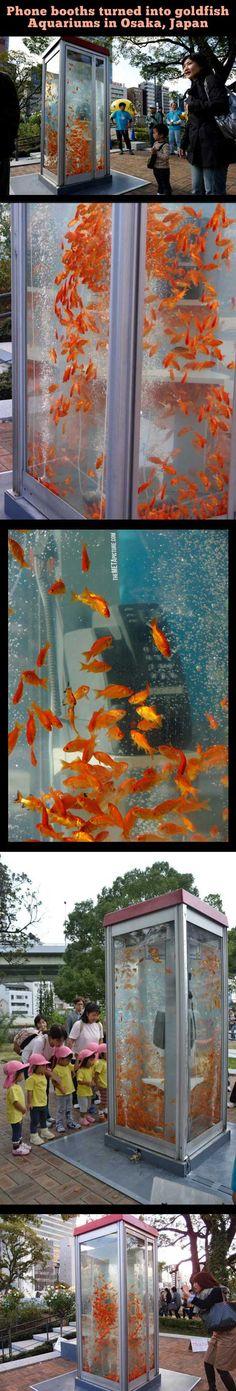 Aquarium phone booths…Strange times haha http://www.youtube.com/channel/UCdldCQP1XtDL4cTafY7m-2w?sub_confirmation=1 #fish #water #phonebooth