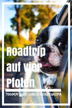 Roadtrip mit Hund: 7000km quer durch Nordeuropa. Unsere Erfahrungen! Reisen In Europa, Camping, Roadtrip, Van Life, Boston Terrier, Dogs, Sport, Travel, Animals