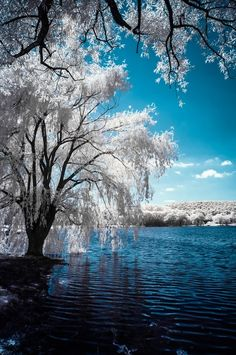 42 Ideas For Nature Photography Trees Scenery Beautiful World, Beautiful Images, Landscape Photography, Nature Photography, Infrared Photography, Photography Styles, Winter Scenes, Oh The Places You'll Go, Amazing Nature