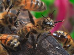 Social bee-haviour: The secret life of the hive  http://www.newscientist.com/gallery/bee-haviour