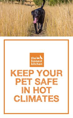 As it warms up, it's important to make sure you know how to keep your pets cool. Here are some tips on keeping your pets safe in hot climates.  #THK #honestkitchen #thehonestkitchen #hotclimates #health #training #tips #dog #dogs #pets