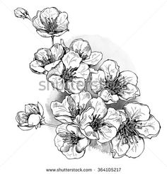 Immagine vettoriale stock 364105217 a tema Flowers Cherry Vector Black White Illustration (royalty free) Cherry Tattoos, Flower Tattoos, Black Tattoos, Body Art Tattoos, Cool Tattoos, Tatoos, Pen Illustration, Blossom Tattoo, Floral Drawing