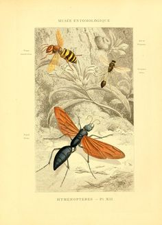t 3 - Musée entomologique illustré : - Biodiversity Heritage Library