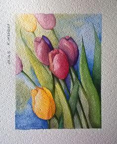 acquerello - tulipani