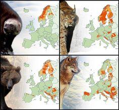 http://www.vividmaps.com/2017/12/large-carnivores-of-europe.html