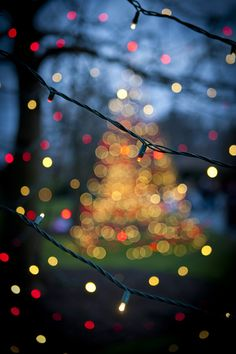 outdoormagic:  Christmas Lights by Kristin Castenschiold