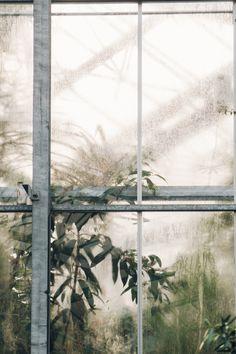 Haarkon Light Window Glass Plant Botanical Painting