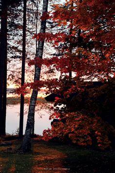 syksyn perinteiset | Vaaleanpunainen hirsitalo | Idealista