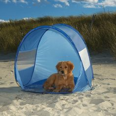Guardian Gear Blue Beach Cabana Pet Dog Sun Beach Shelter x x Dog Beach, Beach Fun, Shelter, Puppy Diapers, Beach Cabana, Beach Gear, Dog Boutique, Dog Accessories, Dog Friends