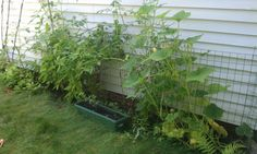 Tomatoes, Pumpkins, Cucumbers...and one Sunflower!