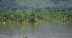 En el Bajo Yuna alrededor de 15 mil tareas de arroz fueron afectadas por las inundaciones LA VEGA. El Ministerio de Agricultura, conjuntamente con otr...