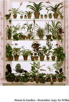 1000 images about window shelves on pinterest window shelves kitchen windows and window - Houseplants thrive low light youre window sill ...