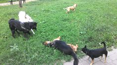 08/09/2015 - Torino con Peja, Temi, Ollie e Bobby