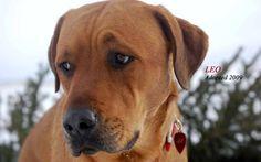 Leo adopted 2009!