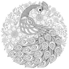 Illustration of Peacock in style. Adult antistress coloring page. Black and white hand drawn doodle for coloring book vector art, clipart and stock vectors. Peacock Drawing, Peacock Wall Art, Peacock Coloring Pages, Coloring Book Pages, Mandala Painting, Mandala Art, Pop Art Wallpaper, Art Corner, Painting Patterns