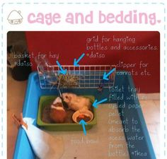 Best Guinea Pig Cage | Large Guinea Pig Cages For Sale