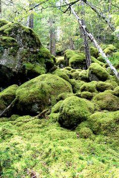 Mossy Rocks - Bella Coola BC