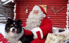 Santa Claus with a reindeer dog in Puolukkamaan Pirtit Reindeer farm in Pello in Lapland