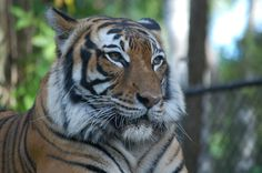 Pay a visit to the furry friends at Naples Zoo! Naples Zoo, Naples Italy, Sanibel Island, Visit Italy, Fort Myers, Honeymoon Destinations, Holiday Travel, Vacation, Friends