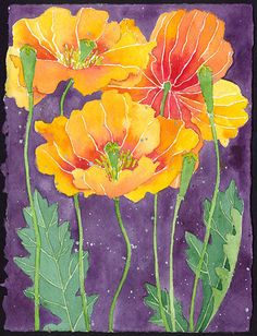 Spanish Poppy.  Watercolour and pencil on Arches paper.  Currently available through the Print Shop Gallery, Remuera, Auckland, NZ http://www.printshopgallery.co.nz/
