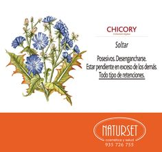 Chicory: Soltar. Flores de Bach de NATURSET Reiki, Bach Flowers, Workout For Flat Stomach, Flower Cards, Flower Power, Zen, Remedies, Therapy, Healing