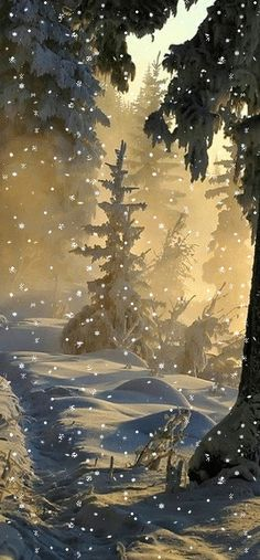 Beautiful snow fall on a forest.