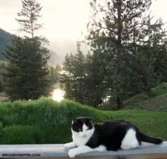 Friday's Hunt, Week's Favorite, Harry the Farm cat