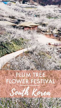 Although cherry blossoms might get all of the attention in Spring flower festival season, Gwangyang's Plum Flower Festival in March is a whole month before! South Korea Beauty, South Korea Travel, Asia Travel, Travel Info, Travel Guides, Travel Tips, Travel Essentials, Places To Travel, Places To Visit