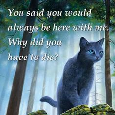 Bluestar is talking to her dead love, oakheart