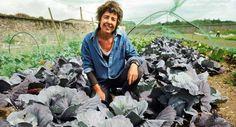 Susan Turner - Head Gardener Cabbage, Vegetables, Garden, Summer, Garten, Summer Time, Lawn And Garden, Cabbages, Vegetable Recipes