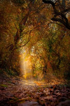 Forest by Thomas Roux