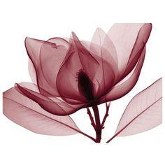 Art.com Red Magnolia I Wall Art Print