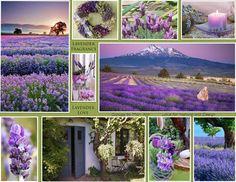 Lavender colors ~