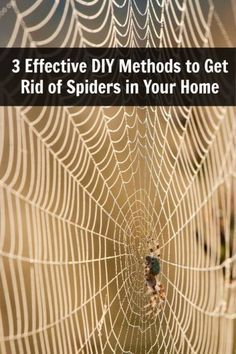 3 Effective DIY Methods to Get Rid of Spiders in Your Home  Not sure if they work but I am willing to try cause I hate hate hate spiders