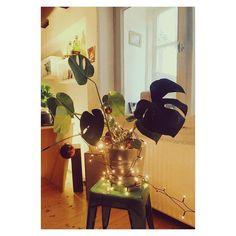 Oh Fensterblatt Oh Fensterblatt! #weihnachten #monstera #vscocam
