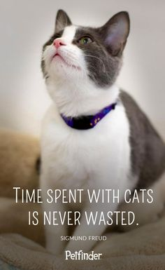 """One of our favorite pet quotes: """"Time spent with cats is never wasted."""""""