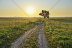 Inspiring Path - Fotobehang & Behang - Photowall