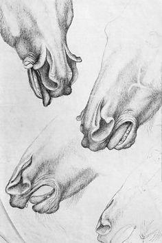 File:Pisanello, cavallo dalle narici spaccate, cabinet des dessins.jpg